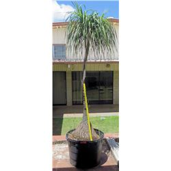 Tall Potted Palm Plant (by RM-406)