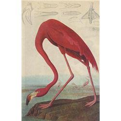 Vintage Audubon Print, Pink Flamingo