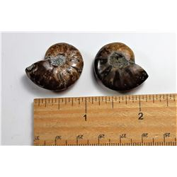 7)  LOT OF 2 AMMONITE FOSSIL SPECIMENS