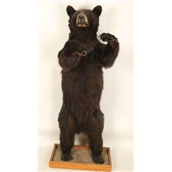 Small Full Mounted Standing Bear