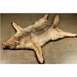 Coyote Rug with head mount