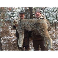 8 Day Winter Lynx Hunt