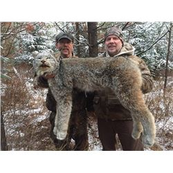 8 Day Winter Lynx Hunt