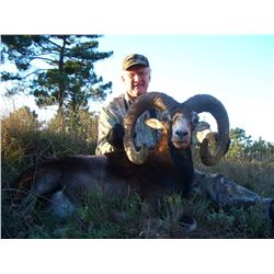 FERNANDO SAIZ: 3-Day Iberian Mouflon Sheep Hunt for Two Hunters in Spain - Includes Trophy Fees