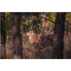POGUE RANCH: 2-Day Red Stag and Red Hine Meat Hunt for One Hunter and One Non-Hunter in Oklahoma - I
