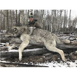 SAVAGE ENCOUNTERS: 6-Day Wolf Hunt for Two Hunters and Two Non-Hunters in Alberta, Canada - Includes