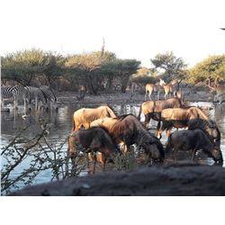 THOLO SAFARIS: 7-Day Plains Game Safari for One Hunter and One Non-Hunter in Botswana - Includes Tro