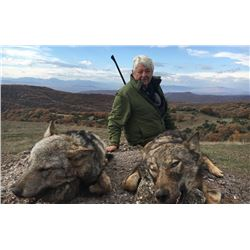 SAFARI INTERNATIONAL: 5-Day Wolf Hunt for One Hunter and One Non-Hunter in Macedonia - Includes Trop