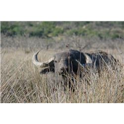 WORLD's END: 7-Day Big Game Hunt for Three Hunters in Argentina - Includes Trophy Fees