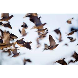PARANA SUNRISE: 4-Day/5-Night Dove Hunt and Golden Dorado Fishing Adventure for Five Hunters