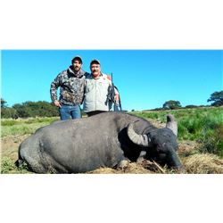 TS BUENOS: 4-Day Water Buffalo and Pampas Ram Hunt for Three Hunters in La Pampa, Argentina - Includ