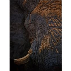 "DAWIE FOURIE: ""Character"" - Original Oil Painting on Canvas by Renowned Elephant Artist Dawie Fourie"