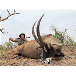 CLUB FAUNE: 7-Day Western African Savannah Buffalo OR Roan Antelope Hunt for One Hunter and One Non-