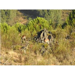 PORTUGAL HUNTING: 5-Day Mouflon Hunt for One Hunter in Portugal - Includes Trophy Fee
