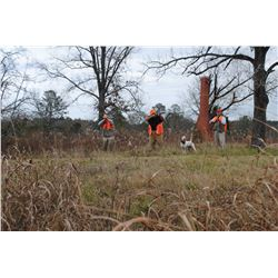 FAMILY EXPEDITIONS: 2-Day/3-Night Quail Hunt for Four Hunters in Alabama