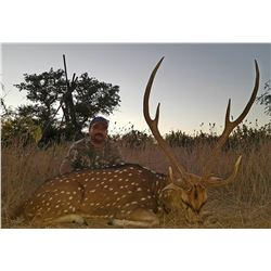 Y.O. RANCH: 3-Day Exotic Species Hunt for Two Hunters and Two Non-Hunters at the Y.O. Ranch in Texas