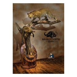 BRUSH COUNTRY: Life-Size Leopard Taxidermy Mount on Julian & Sons Black Walnut Base