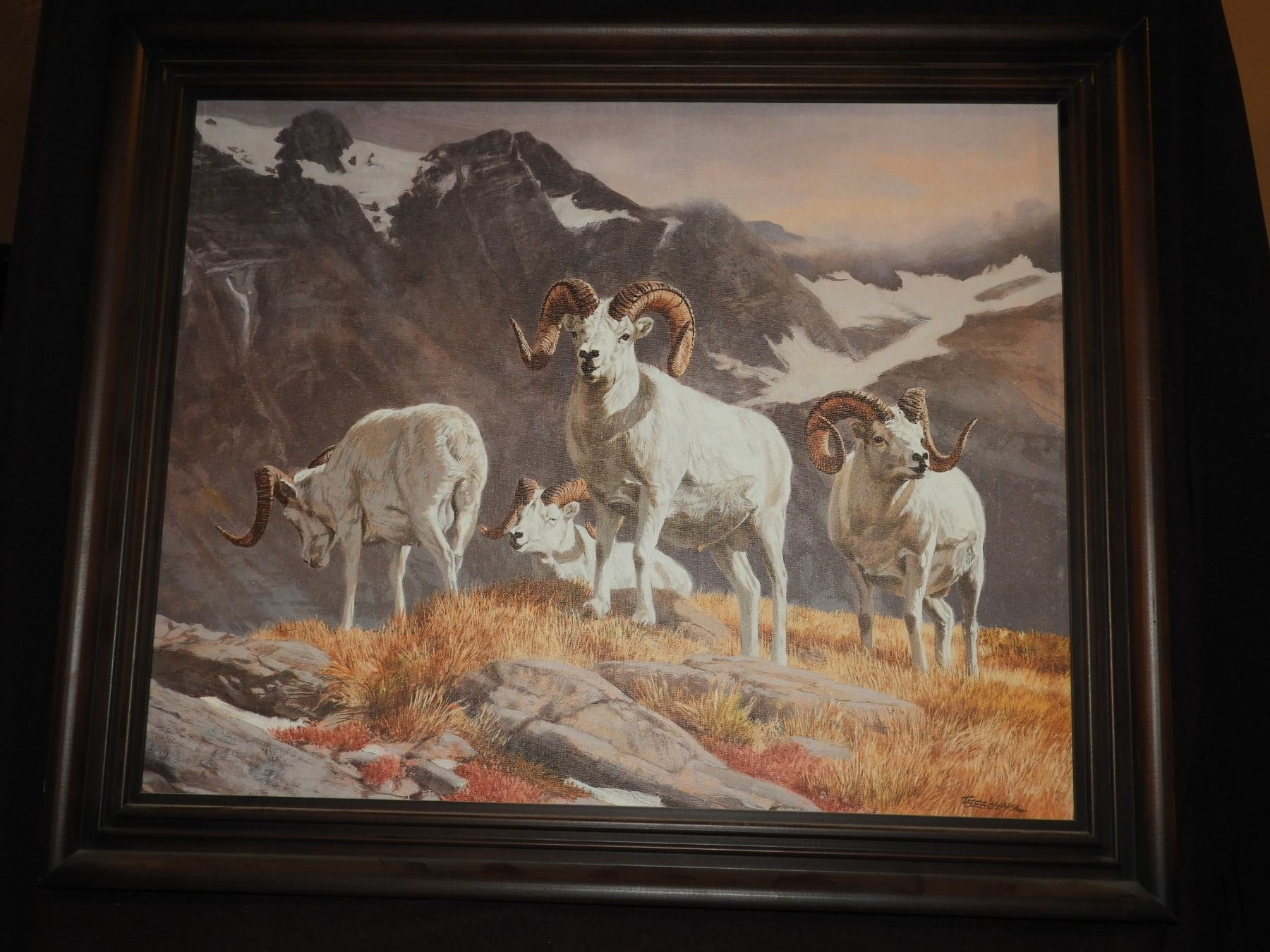 Dall Sheep Print