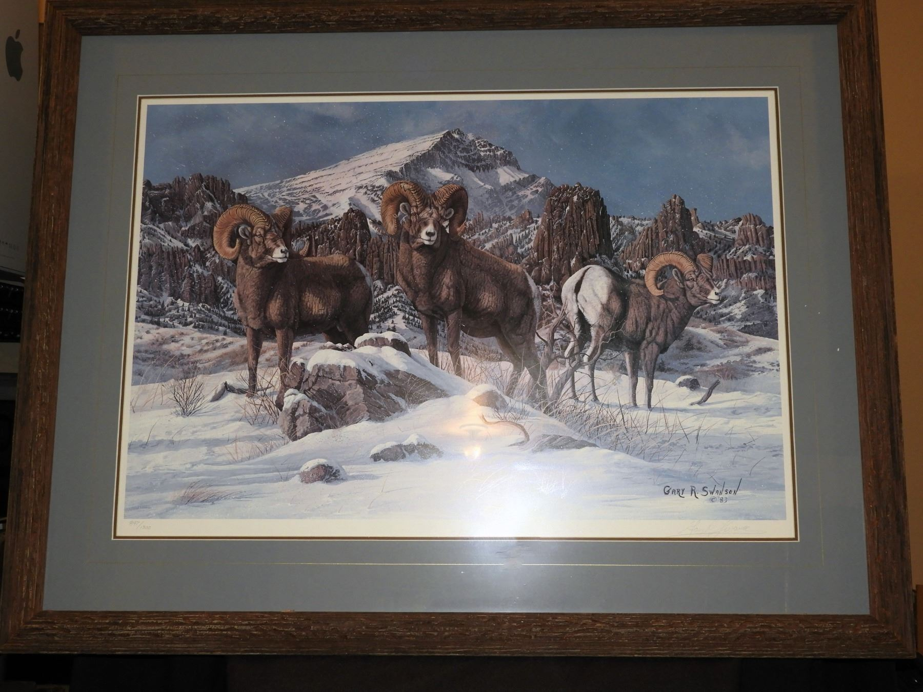 North Fork Rams  by Gary Swanson