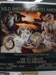 Wild Sheep of North America  by Vivi Crandall