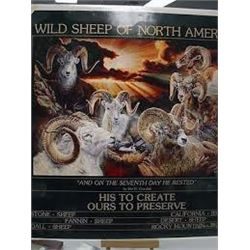 """Wild Sheep of North America"" by Vivi Crandall"