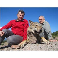 5 - DAY WOLF HUNT FOR 5 HUNTERS (100% FULLY DONATED) SAFARI INTERNACIONAL MACEDONIA