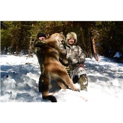 6 - DAY COUGAR HUNT FOR 1 HUNTER KETTLE RIVER OUTFITTERS