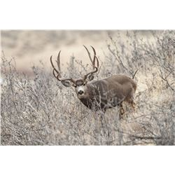 NEVADA UNIT 231 PRIVATE OWNERS DEER TAG - FOR 1 HUNTER (100% FULLY DONATED)  PEPPERMILL CASINO & GEY