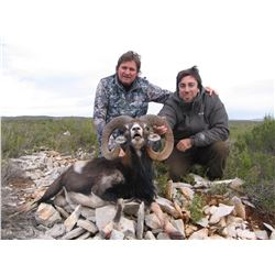 4 - DAY AOUDAD OR MOUFLON SHEEP HUNT FOR 1HUNTER IN SPAIN (Trophy fee for aoudad or Iberian mouflon