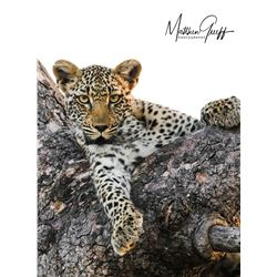"5 - DAY/5 - NIGHT EXCLUSIVE ""BIG 5"" PHOTO SAFARI FOR 2 PEOPLE WITH LUXURY LODGING MATTHEW GREEFF SAF"