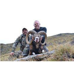 4 - DAY IBERIAN MOUFLON SHEEP HUNT FOR 1 HUNTER AND 1 NON-HUNTER TROPHY HUNTING SPAIN