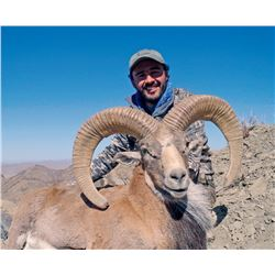 5 - DAY URIAL HUNT IN PAKISTAN FOR 1 HUNTER (Hunters Choice: Blandford Urial, Afghan Urial or Punjab