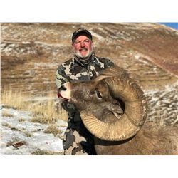 COLORADO ROCKY MOUNTAIN BIGHORN SHEEP LICENSE RMBS