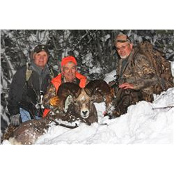 STATE OF WASHINGTON CALIFORNIA BIGHORN SHEEP PERMIT STATE OF WASHINGTON DEPARTMENT OF FISH AND WILDL