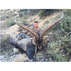 14 - DAY SPANISH IBEX GRAND SLAM HUNT FOR 1 HUNTER (Trophy fees for SCI bronze medal Gredos, Ronda,