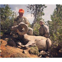 WYOMING ROCKY MOUNTAIN BIGHORN SHEEP LICENSE WYOMING GAME & FISH DEPARTMENT