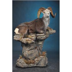 LIFE-SIZE WILD SHEEP MOUNT WITH HABITAT AND BASE DEWEY WILDLIFE STUDIO