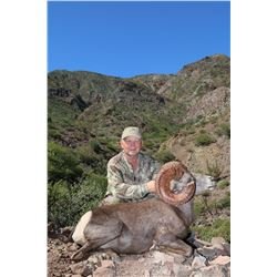 CARMEN ISLAND, MEXICO, DESERT BIGHORN SHEEP  MEXICO HUNTS/SERGIO JIMENEZ