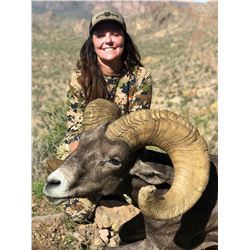 ARIZONA DESERT BIGHORN SHEEP PERMIT ARIZONA GAME & FISH DEPARTMENT
