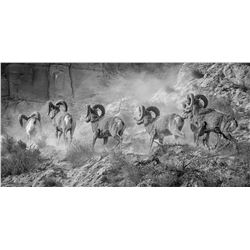 """THE GREAT MARCH WEST"" CALIFORNIA BIGHORNS FROM KAMLOOPS, B.C. 18"" X 36"" CANVAS PRINT JEFFREY JACKSO"