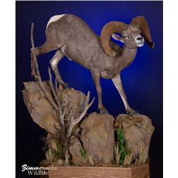 LIFE-SIZE WILD SHEEP MOUNT WITH BASE ZIMMERMAN WILDLIFE