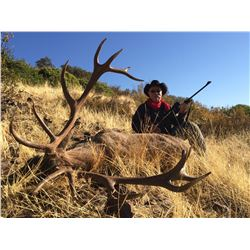 ATP HUNT 5-Day and 4-Night Iberian Red Stag and European Wild Boar hunt for 1 hunter in Ciudad Real/