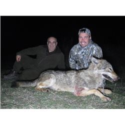 SAFARI EHA Wolf Hunt in Macedonia for 2 Hunters