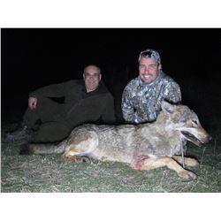SAFARI EHA Wolf Hunt in Macedonia for 2 Hunters