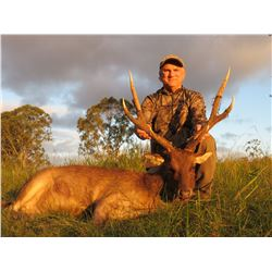 KINGHAM SAFARIS AUSTRALIA 3-day RARE Moluccan Rusa hunt for one hunter