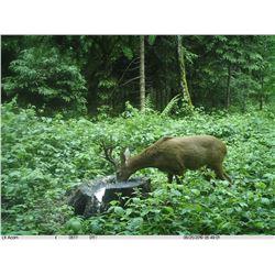 SAFARI INTERNATIONAL MACEDONIA 5-Day Roe Deer hunt for 1 Hunter and 1 Non-Hunter in Macedonia