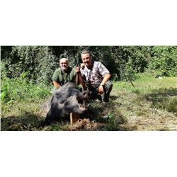 SAFARI ART Wild Boar Hunt for 2 Hunters in Serbia
