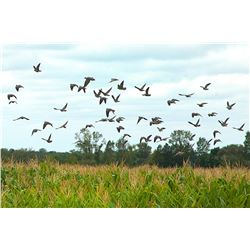 PAMPA ADVENTURES & MAPU HUNTING LODGE 4-day Guided dove hunt for up to 4-hunters in Argentina.