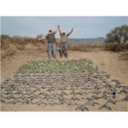 MG HUNTING 3-Day Dove and Pigeon Hunt for Up to 6 Hunters in Argentina