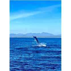 San Jose del Cabo - 1 Day Offshore Fishing for 5 – Rocky Mountain Equipment
